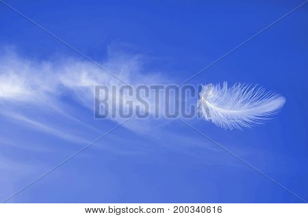 Soaring flight of white aerial fluffy feather at blue sunny sky with beautiful cirrus clouds