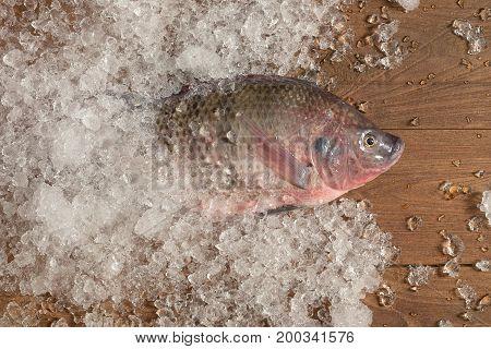 Fresh Nile Tilapia Mango Fish Nilotica Fish On Ice And Wooden Background