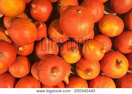 Small Orange Pumpkins on Old Wooden Table. Autumn Harvest Organic Vegetables Background. Russia.