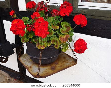 Beautiful blooming colorful flowers by a window classical typical decoration
