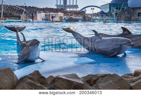 Dolphins At Port Of Nagoya Public Aquarium