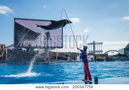 Dolphins And Their Trainer In Port Of Nagoya Public Aquarium