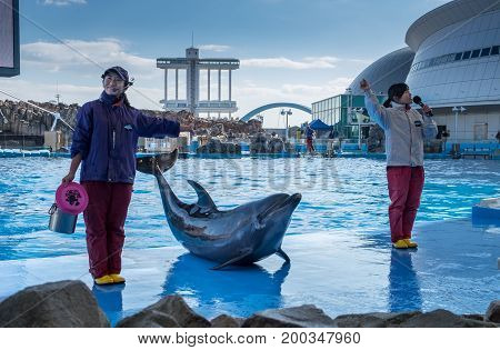 Dolphins And Their Trainers In Port Of Nagoya Public Aquarium