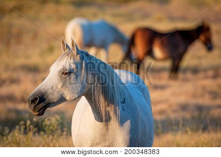 portrait of a white horse on a sunny day