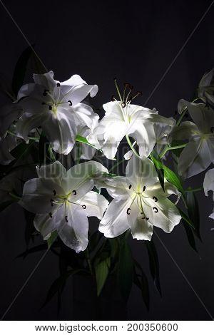 Large white lilies. Bouquet. Lighting. Petals. Flowers. Stamens