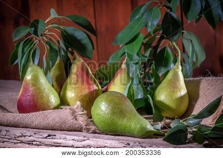 A bunch of ripe pears lying on the cloth toned.
