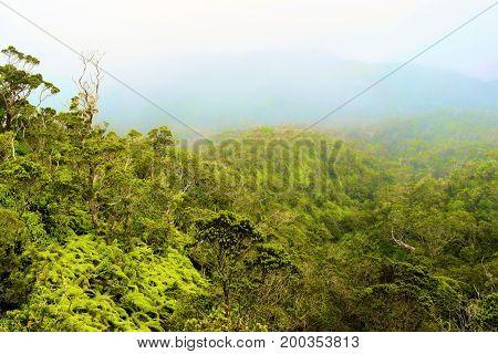 Lush green trees at a rain forest taken during a rainy day taken in Kauai, HI