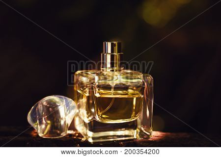 bottle of Natural perfume on dark blurred background