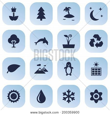 Collection Of Grampu, Isle Beach, Foliage And Other Elements.  Set Of 16 Ecology Icons Set.