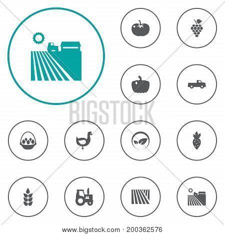 Collection Of Grain, Pickup, Container And Other Elements.  Set Of 12 Agriculture Icons Set.