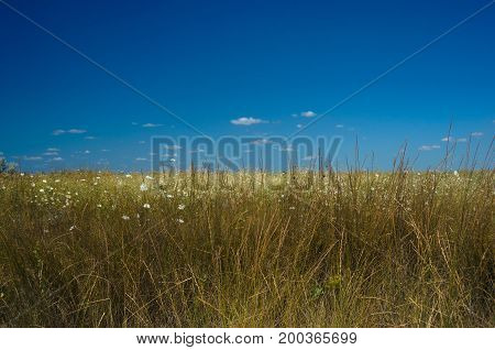 Summer meadow with grass and blue sky.
