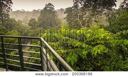 Canopy Walk In Sepilok, Sabah, the Malaysian part of Borneo. An early morning with fog. Rainforest trees. Picture taken from the high tower in the rain.