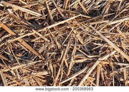 Straw background. of golden colored, scattered pieces of straw/hay.