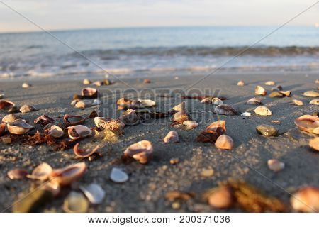 Sea shells on the beach at Cape Cod