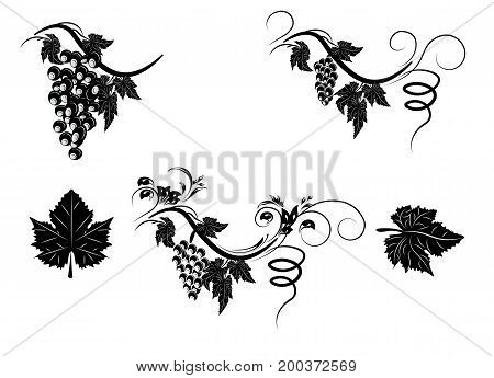 the stylized grapevine with leaves and clusters of grapes a pattern