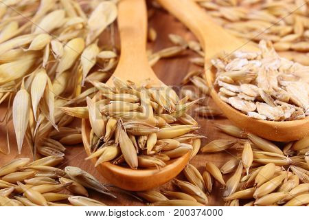 Heap of organic oat grains and oatmeal on wooden spoon with ears of oat lying on wooden board healthy food and nutrition