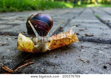 Snail and autumn leaf on a concrete surface