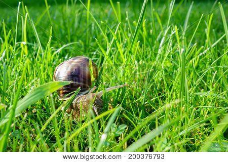 Snail hiding among grass