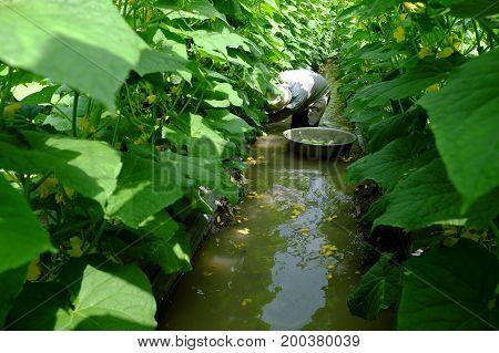 Vietnamese Farmer At Cucumber Garden