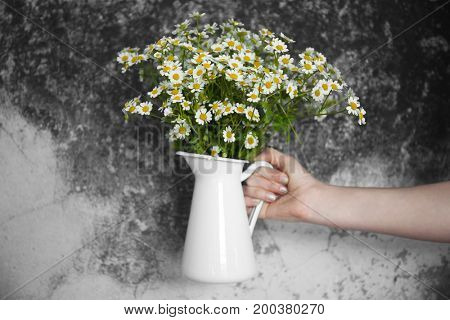 Woman's hand holding jug with beautiful chamomiles against grunge wall