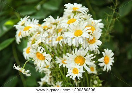 Beautiful chamomile bouquet, close up