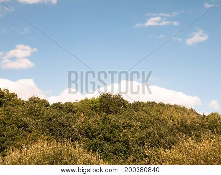 Tree Line Green Background With Blue Sky And Clouds