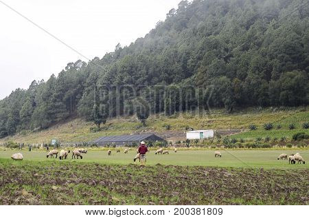 Rural landscape with a shepherd taking care of his sheep in Mexico