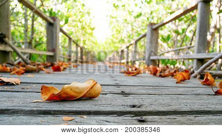 Dry leaf on wooden bridge walkway at mangrove forest select focus.