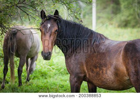 Portrait Of A Rusty Beautiful Horse