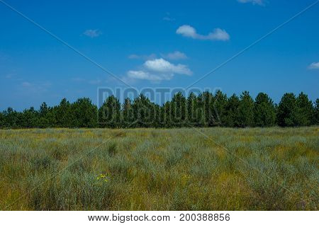 Summer meadow with grass and blue sky. Forest on background.