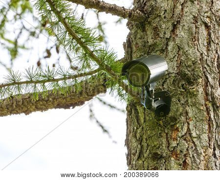 Surveillance camera on the tree. Hidden camera in the forest. Forest safety. Hidden camera.