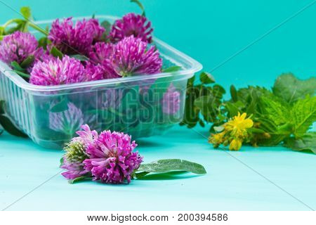 Box With Fresh Red Clover On Green Bacground. St. John's Wort And Mint. Medicinal Plants.