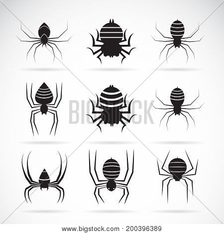 Vector group of spiders on white background. Insect Animals. Spiders Icon.