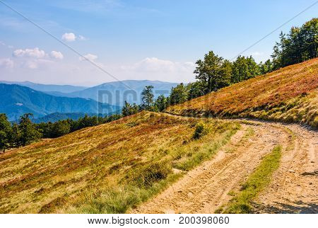 Dirt Road Through Hillside With Beech Forest