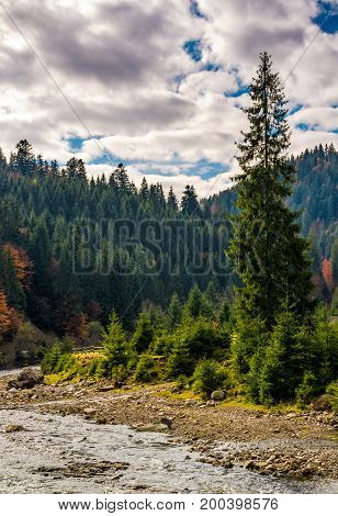 Forest River In Autumnal Countryside