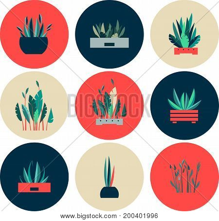 Vector illustration of round shape icons of indoor flowers gardening