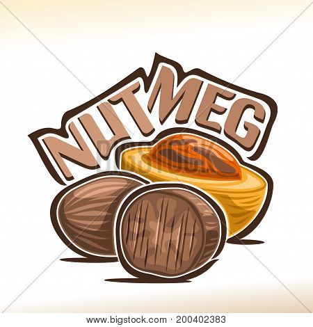Vector logo for Nutmeg: fresh muscat nut in yellow shell and dry brown edible myristica fragrans, poster for cooking spice with title - nutmeg, label for organic product with nutmeg flavor on white.