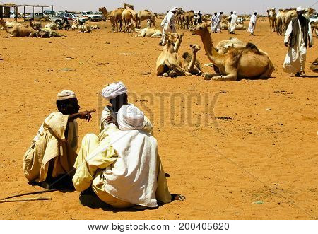 Trading of Camels at the Omdurman market - 05-03-2011 Khartum Sudan
