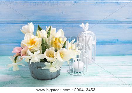 White daffodils and tulips flowers in bucket and candles in decorative candleholders on turquoise painted wooden planks against blue wall. Selective focus. Place for text.
