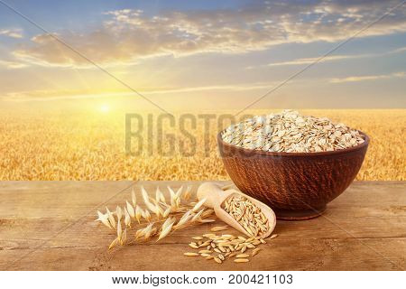uncooked oatmeal in bowl, scoop with grains, oat ears on table with ripe cereal field on the background. Golden field on sunset. Agriculture and harvest concept. Healthy eating for diet and vegan
