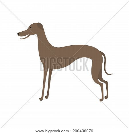 Italian greyhound. Cute vector cartoon dog, isolated on white background