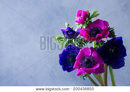 Fresh blooming blue and pink anemones flowers on gray stone background
