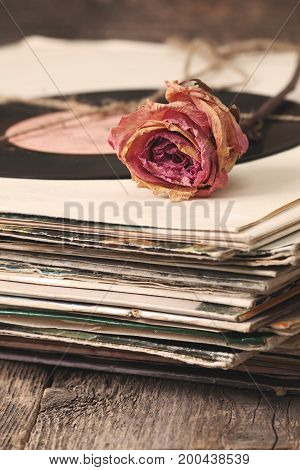 dry rose on a pile of old vinyl records in vintage style