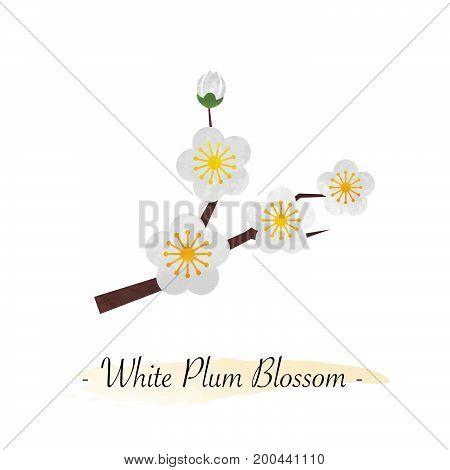 Colorful Watercolor Texture Vector Botanic Garden Flower White Plum Blossom