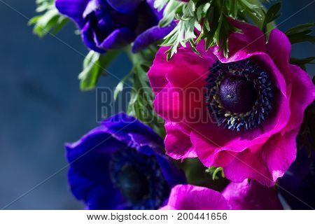 Fresh colorful Anemones pink and blue flowers close up, low key