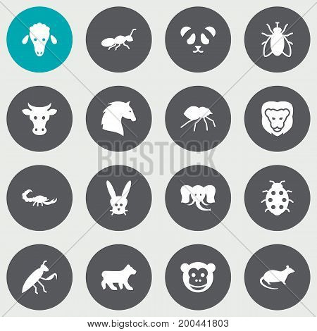 Collection Of Polar, Lamb, Bunny And Other Elements.  Set Of 16 Animal Icons Set.