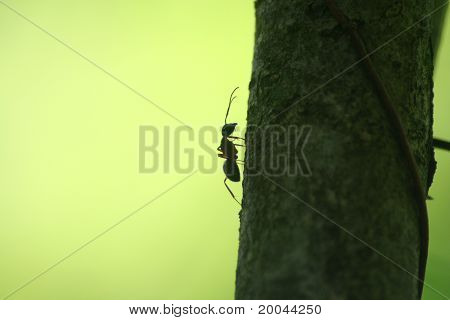 Ant Silhouette