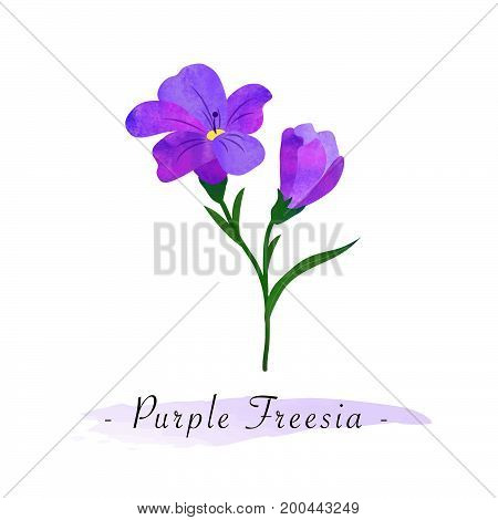 Colorful Watercolor Texture Vector Botanic Garden Flower Purple Freesia