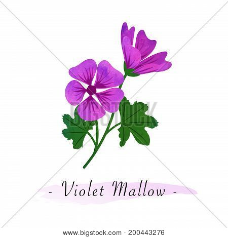 Colorful Watercolor Texture Vector Botanic Garden Flower Violet Mallow