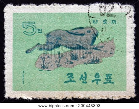NORTH KOREA - CIRCA 1962: a stamp printed in North Korea shows Korean Hare Lepus Coreanus is a Species of Hare Found in the Korean Peninsula circa 1962